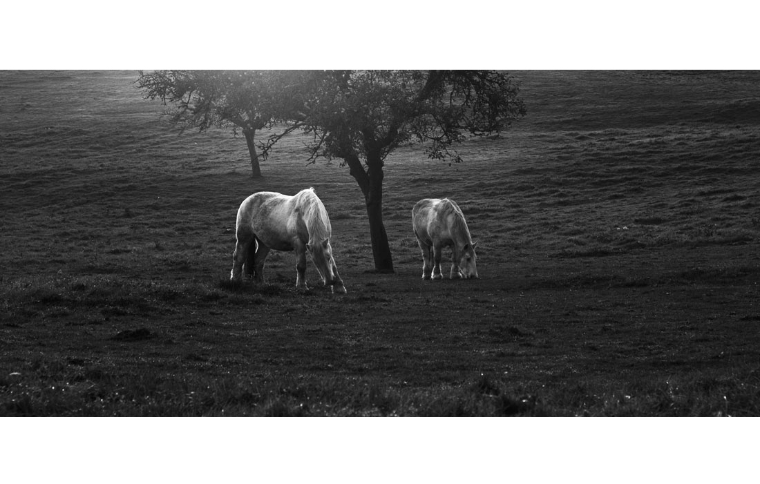 animal-cheval-041