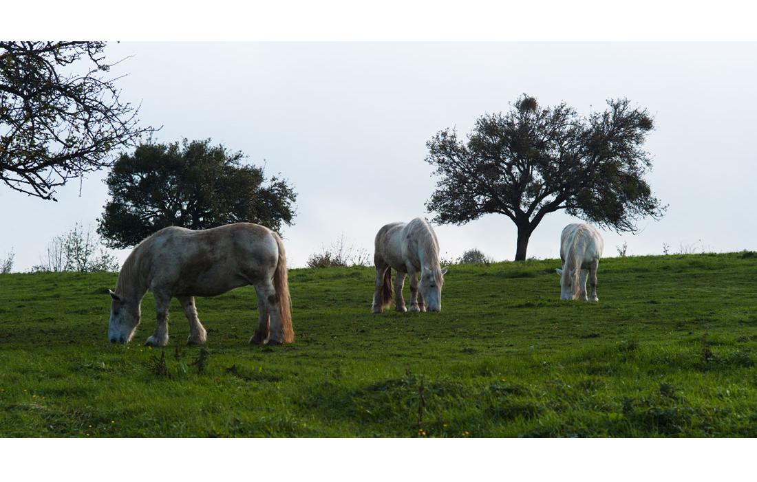 animal-cheval-051