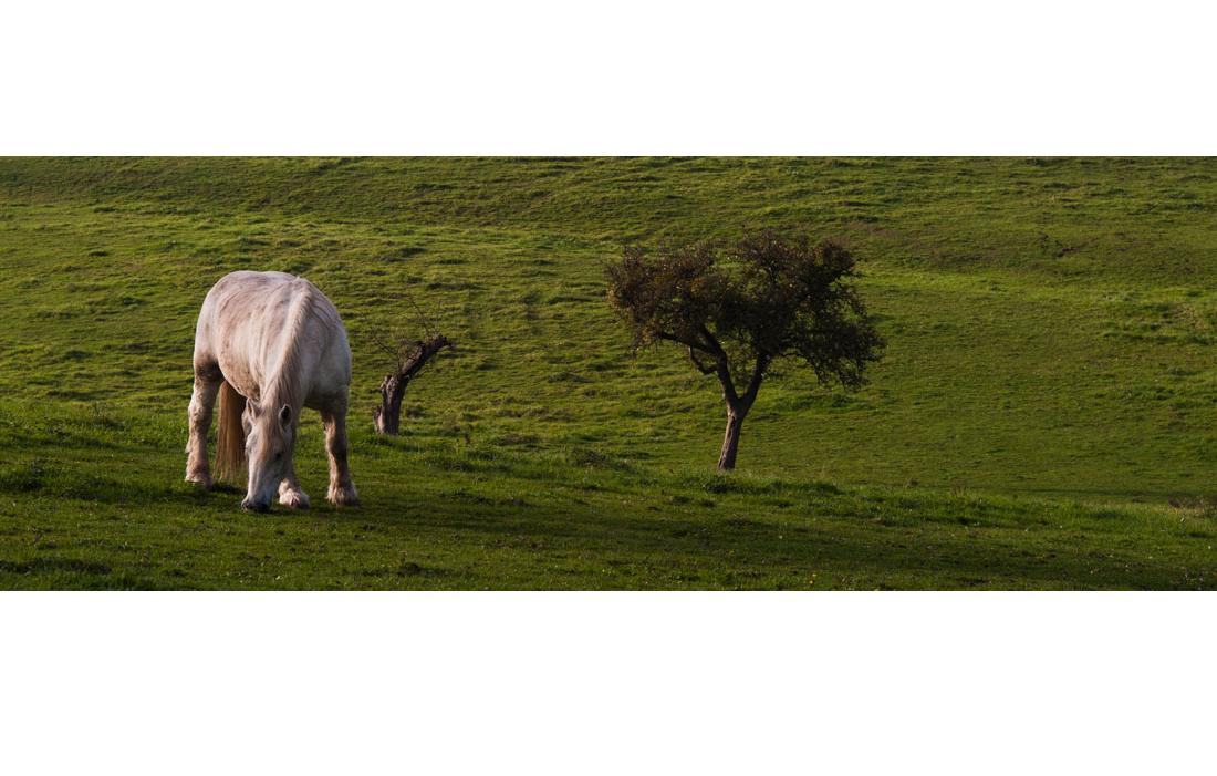 animal-cheval-061