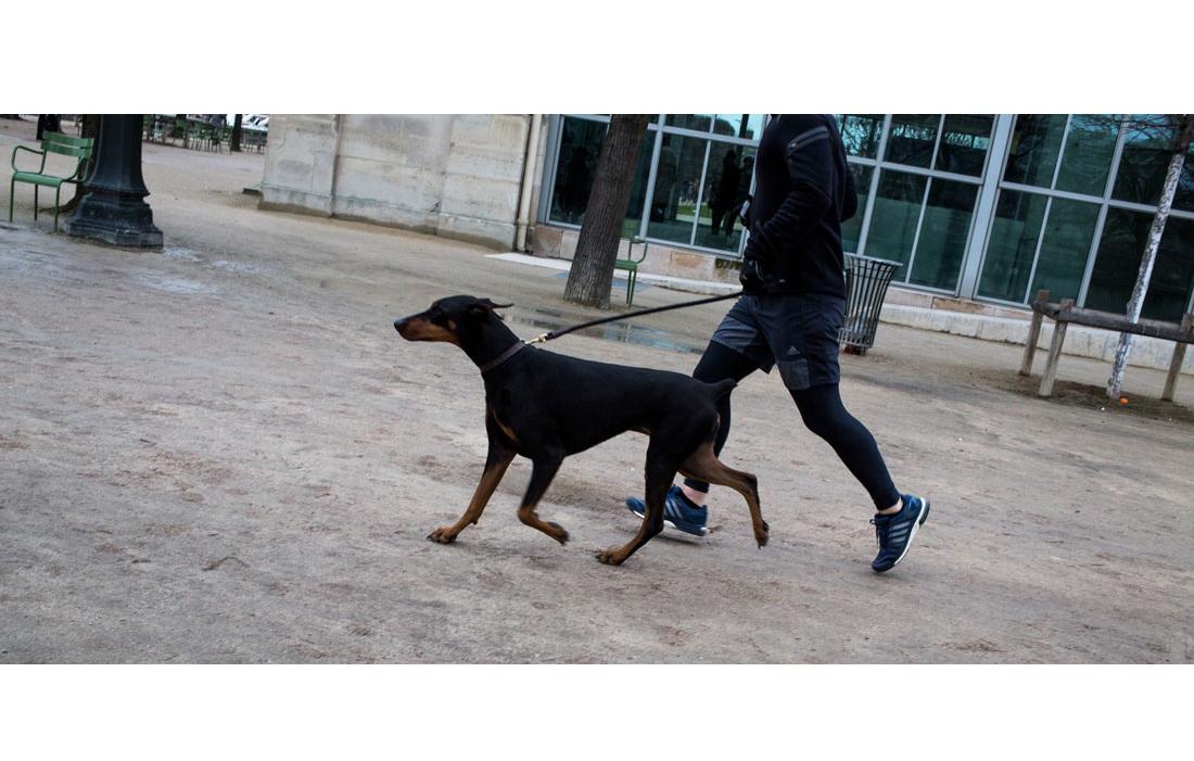 animal-chien-101