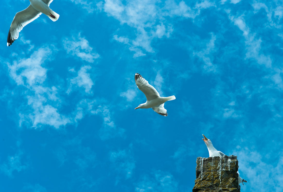animal-mouette-08