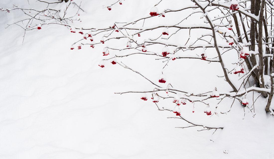 blanc-arbre-04