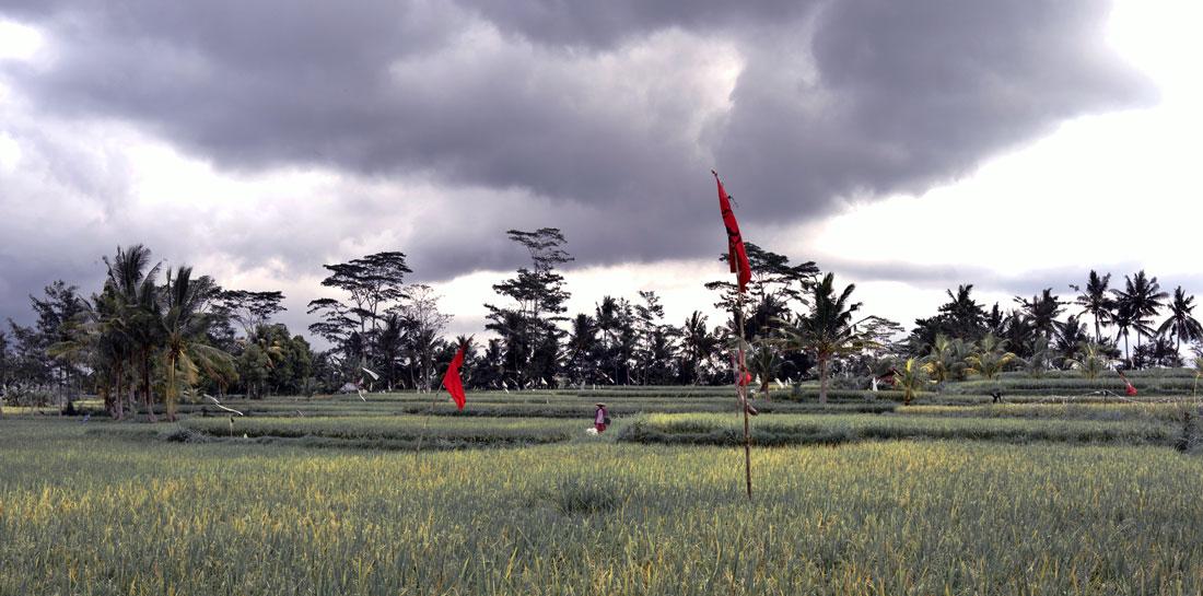 paysage-bali-06